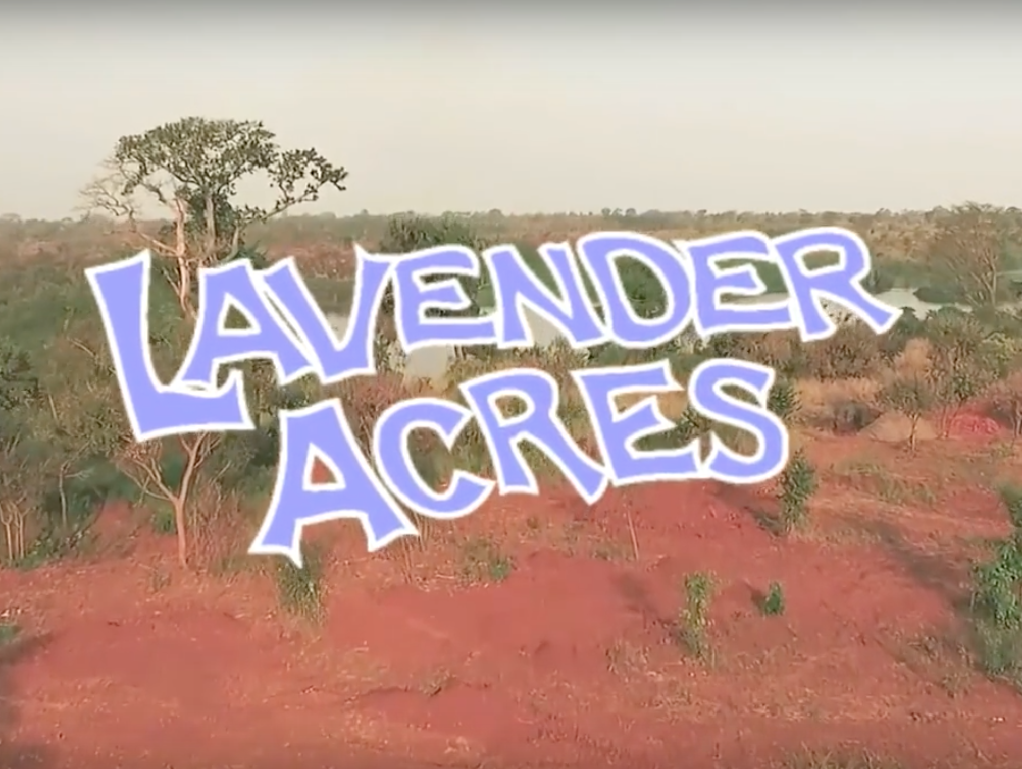 Lavender Acres